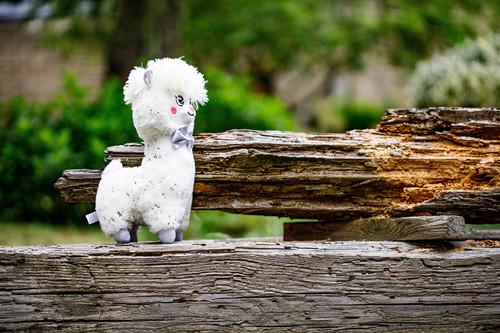 InnoGIO GIOplush GIOalpaca White Cuddly GIO-828WHITE (9)
